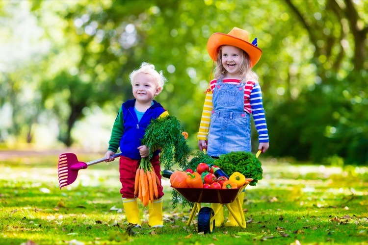 Kids Harvesting Vegetables