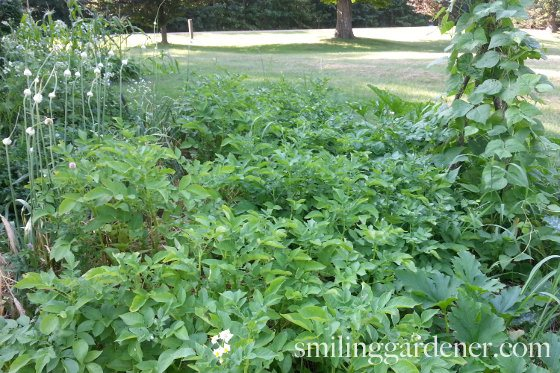 My garden July 2013
