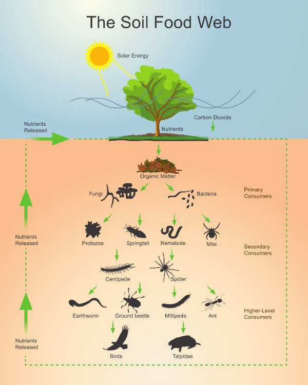 The soil food web for Living things found in soil