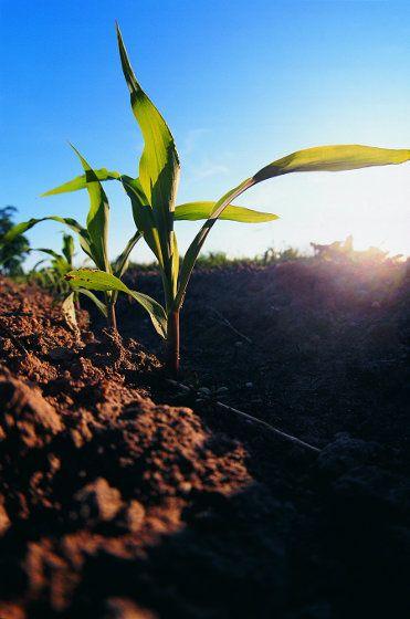 Soil Building Fertilizer Schedule
