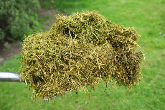 Homemade Fertilizer From Grass