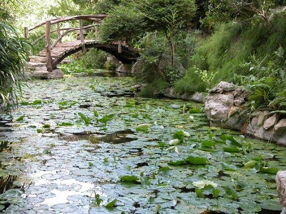 Garden Water Use