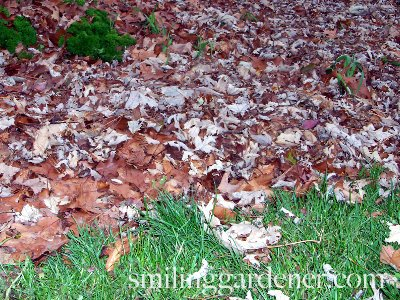Preparing Garden For Winter By Mulching