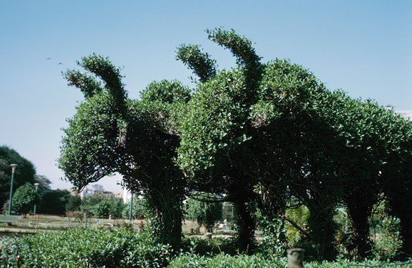 Proper Pruning For Disease