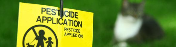 Garden Pesticides And Why We Should Stop Using Them