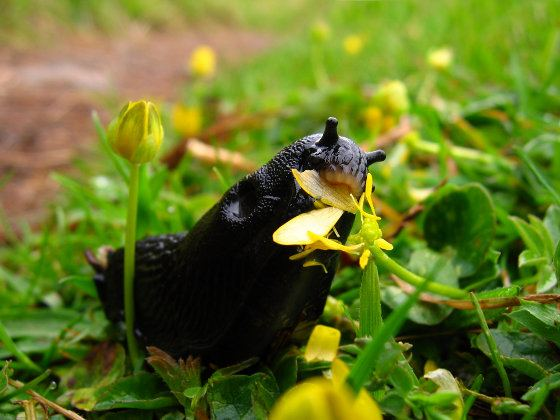 Slug Eating Flower