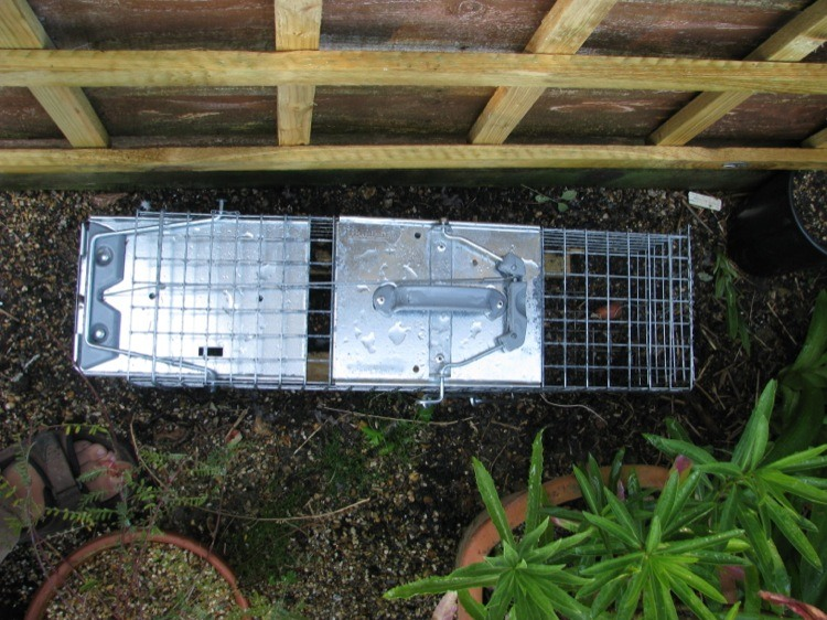How to keep rabbits out of the garden - How to keep rabbits out of a garden ...