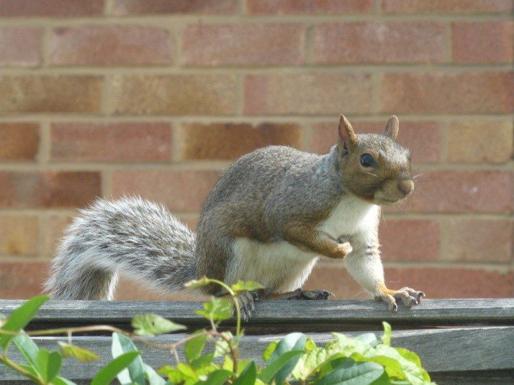 How to keep squirrels out of the garden - How to keep squirrels away from garden ...