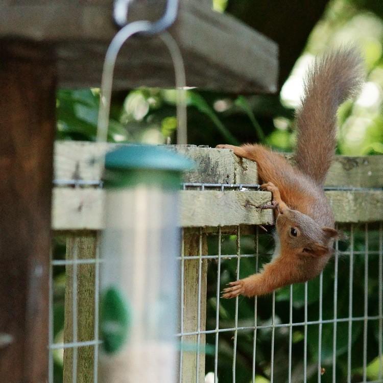 Discouraging Squirrels At Bird Feeder Wiring Diagrams Repair Wiring Scheme