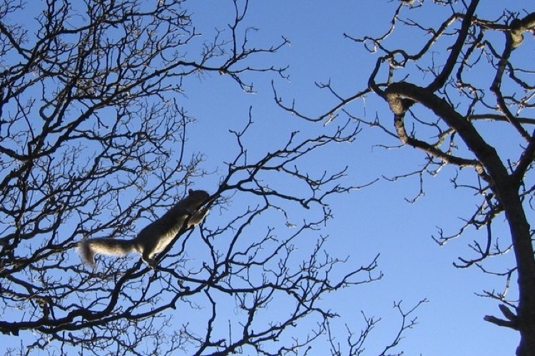Prune Branches