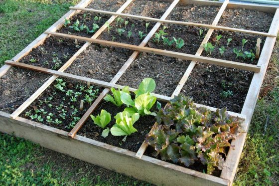 Vegetable Garden Layout  U2013 Rows  Square Foot Or Wild