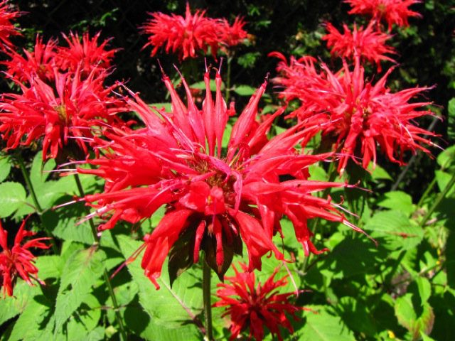 Low Maintenance Plants That Are Also Useful In The Garden