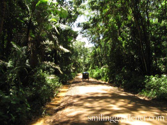Organic Matter In The Amazon