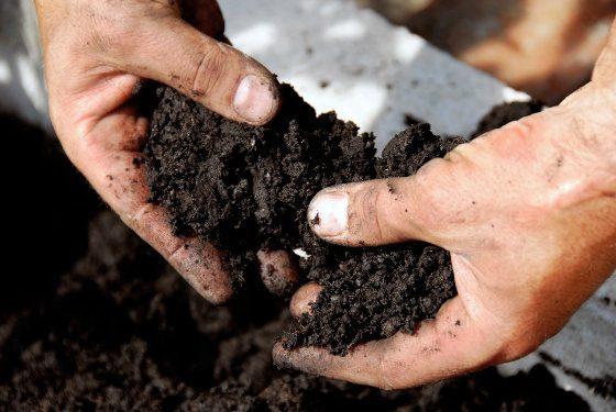 Soil Sample Testing