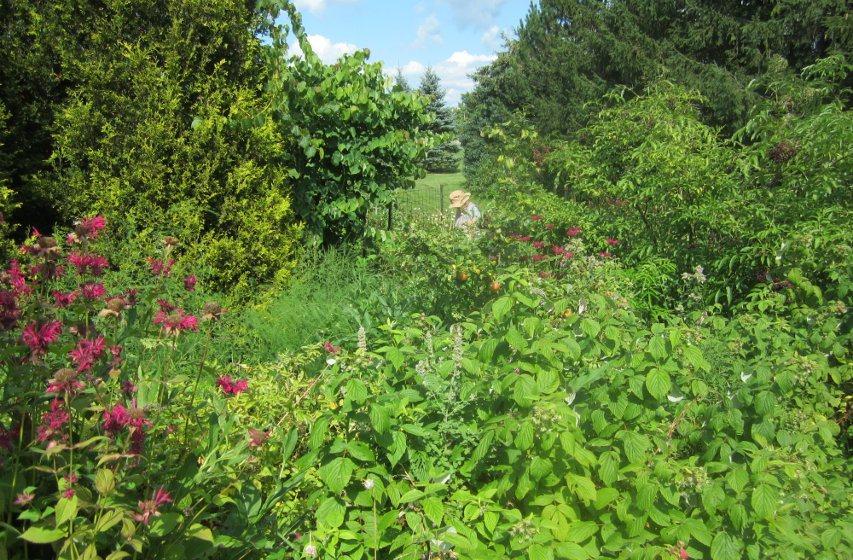 Forest Garden 2015