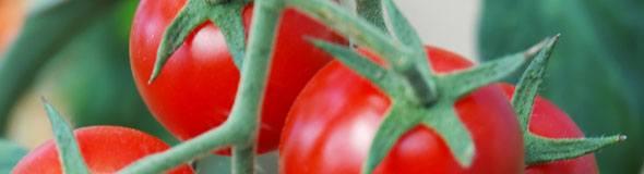 Brix Test A Tomato