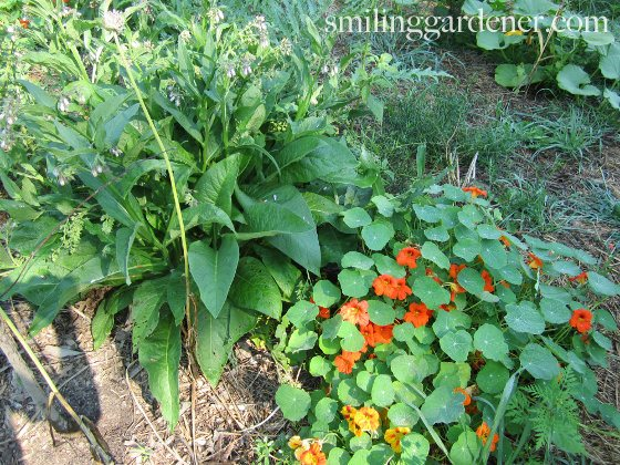 Permaculture Principles In My Garden