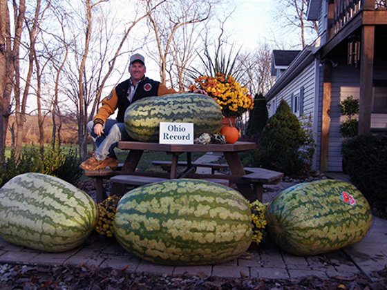 Big Watermelon With Liquid Kelp Fertilizer