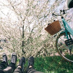 Lying in the grass beneath flowering trees